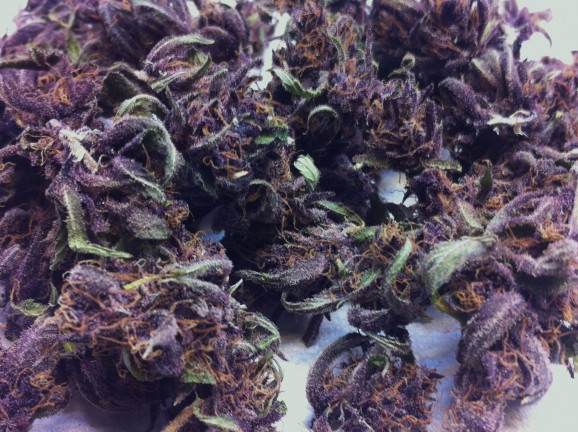 Blackberry Marijuana Strain